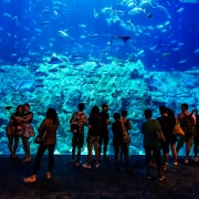 Acvariu Ocean Park - Sursa - Oceanpark.com - O luna de vacanta