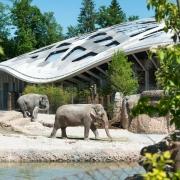 Elefanti la Gradina Zoo - Sursa - Zuerich.com - Vacanta