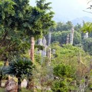 Gradina Botanica - Sursa - Blogspot.com - O luna de vacanta