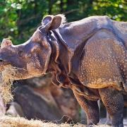 Hellabrunn Zoo - Sursa - Planetware.com