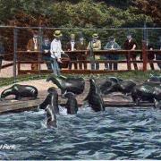 Lei de Mare Gradina Zoo Central Park - Sursa - Wordpress.com - vacanta