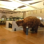 Lenes la Muzeul Zoologic din Zurich - Sursa - Wikimedia.org - Vacanta