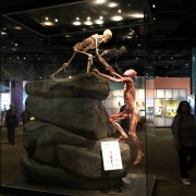 Muzeul Stiintei Denver - Sursa - Trekaroo.com - vacanta