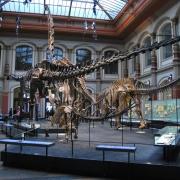 Muzeul de Istorie Naturala Berlin - Sursa- Wikipedia.org