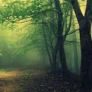 Padurea Baciu - Sursa - Hoiabaciuforest.com