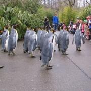 Pinguini la Gradina Zoo - Sursa - Zoobix.com - Vacanta